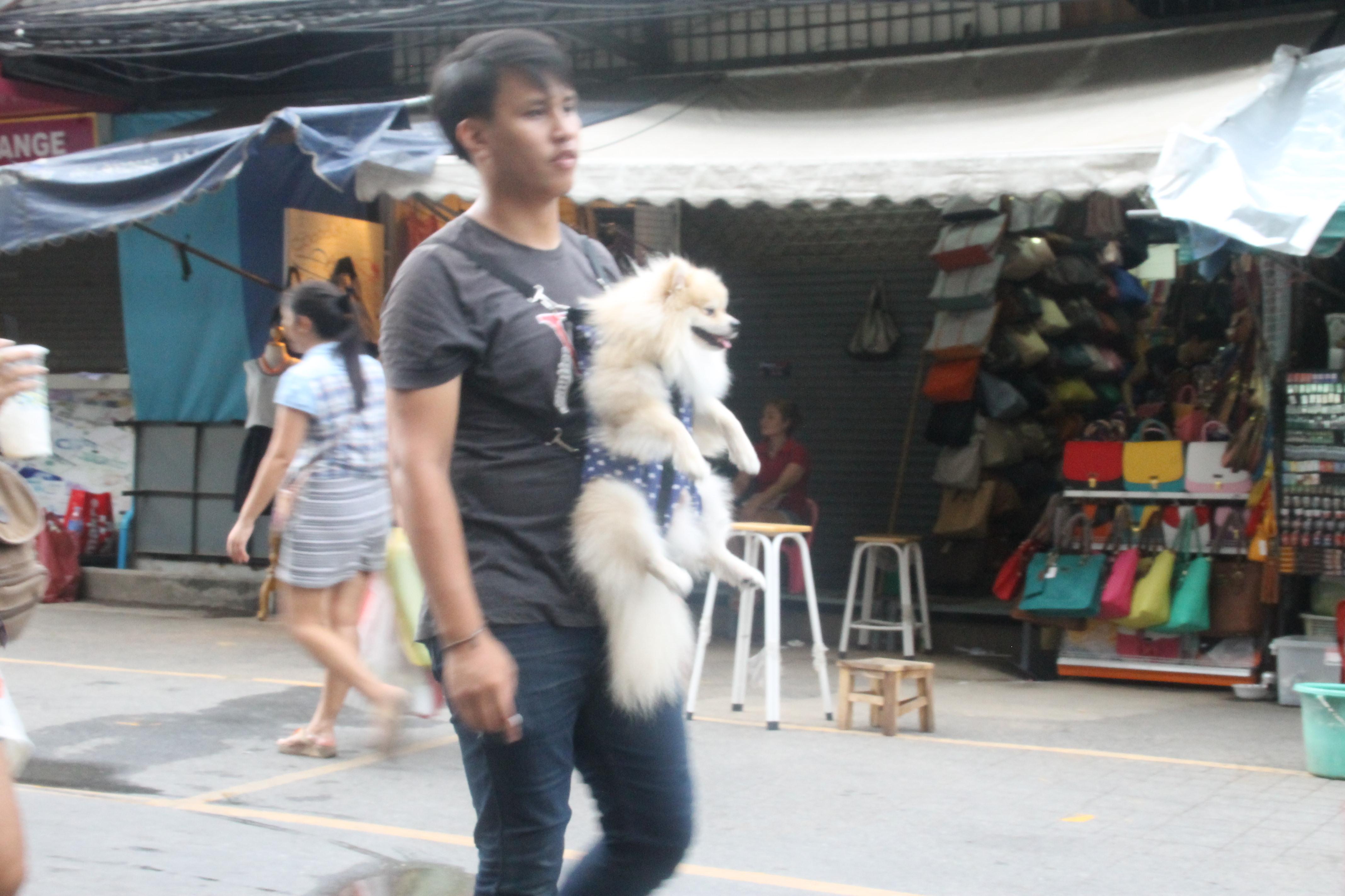 Gassigehen auf thailändisch, ich frage mich nur ob sich der Typ dann an den Baum stellt wenn sein kleiner mal muss.